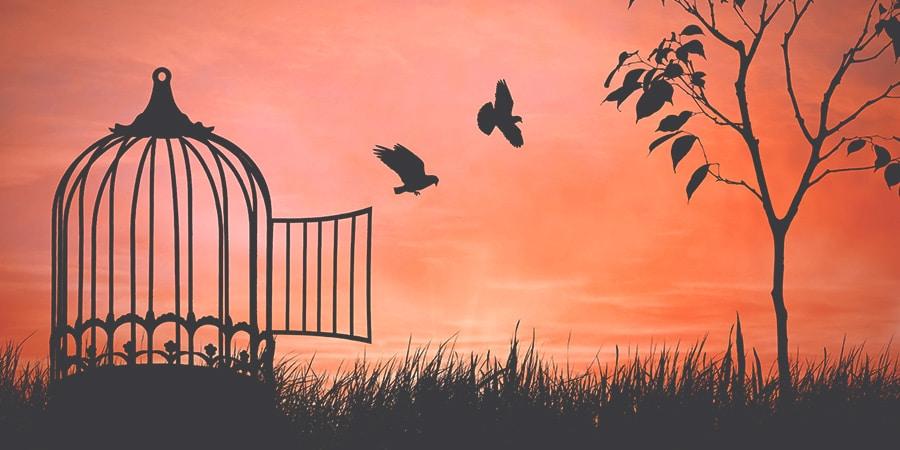 وينو الامل - عصافير